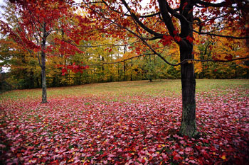 Leaves Fallen by Trees, Leaf Removal & Aeration Services in Ellenwood, GA